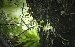 Top 10 loại hoa hiếm đẹp và quý hiếm bậc nhất thế giới